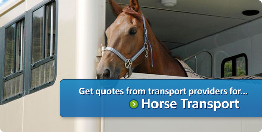 horse transport quotes